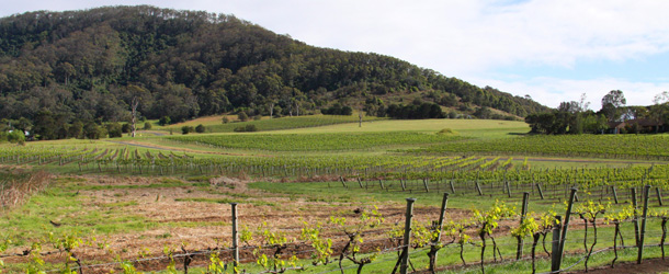 Coolangatta vines